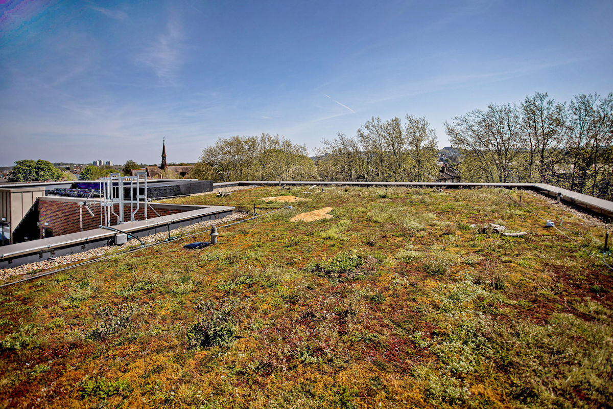 Tessa Jowell healthcentre in Dulwich - green roof Rev b mid.jpg